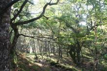 Woodland at the start of the Blain Burn walk