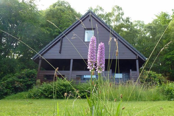 Heath spotted orchids growing in the gardens in front of Hooting Lodge