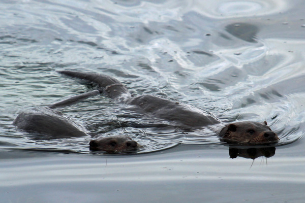 Otters can be seen on nearby Loch Sunart and Loch Moidart