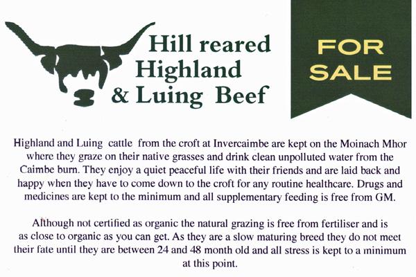 Invercaimbe Highland Beef