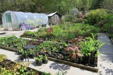 Glenborrodale Nursery