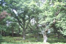 Glencripesdale